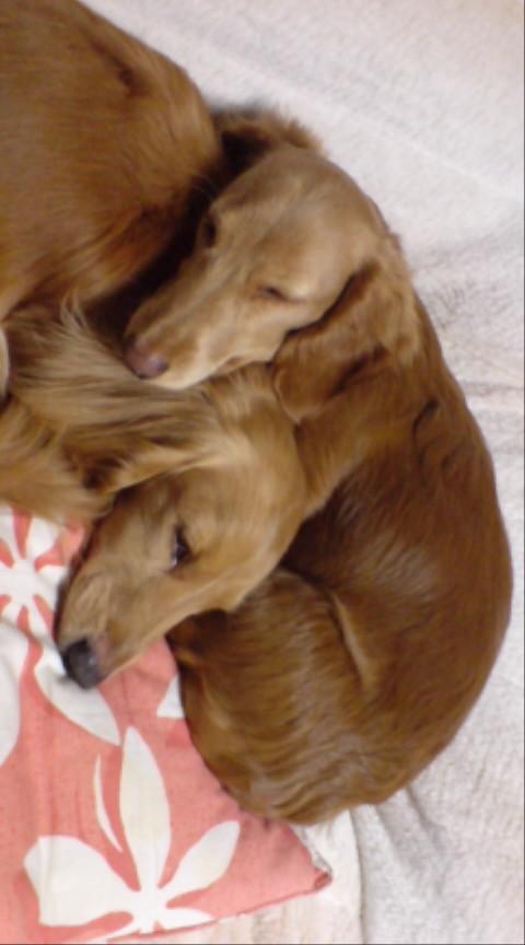 くっついて寝る2匹